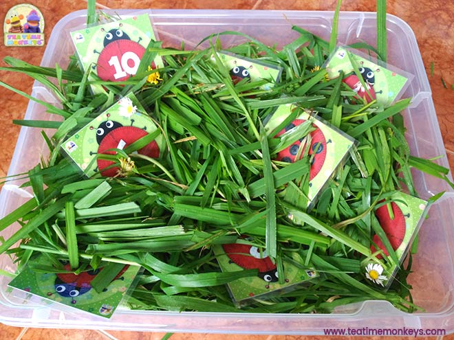 Ladybird Friends - Spring time sensory bin - Tea Time Monkeys